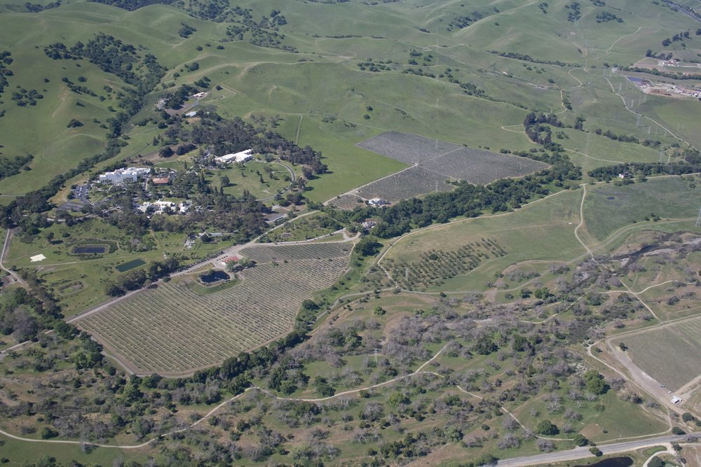 Olivina orchard and olive mill surrounded by Veterans Hospital and Sycamore Grove Regional Park.