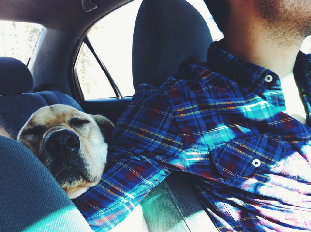 driving-with-a-dog