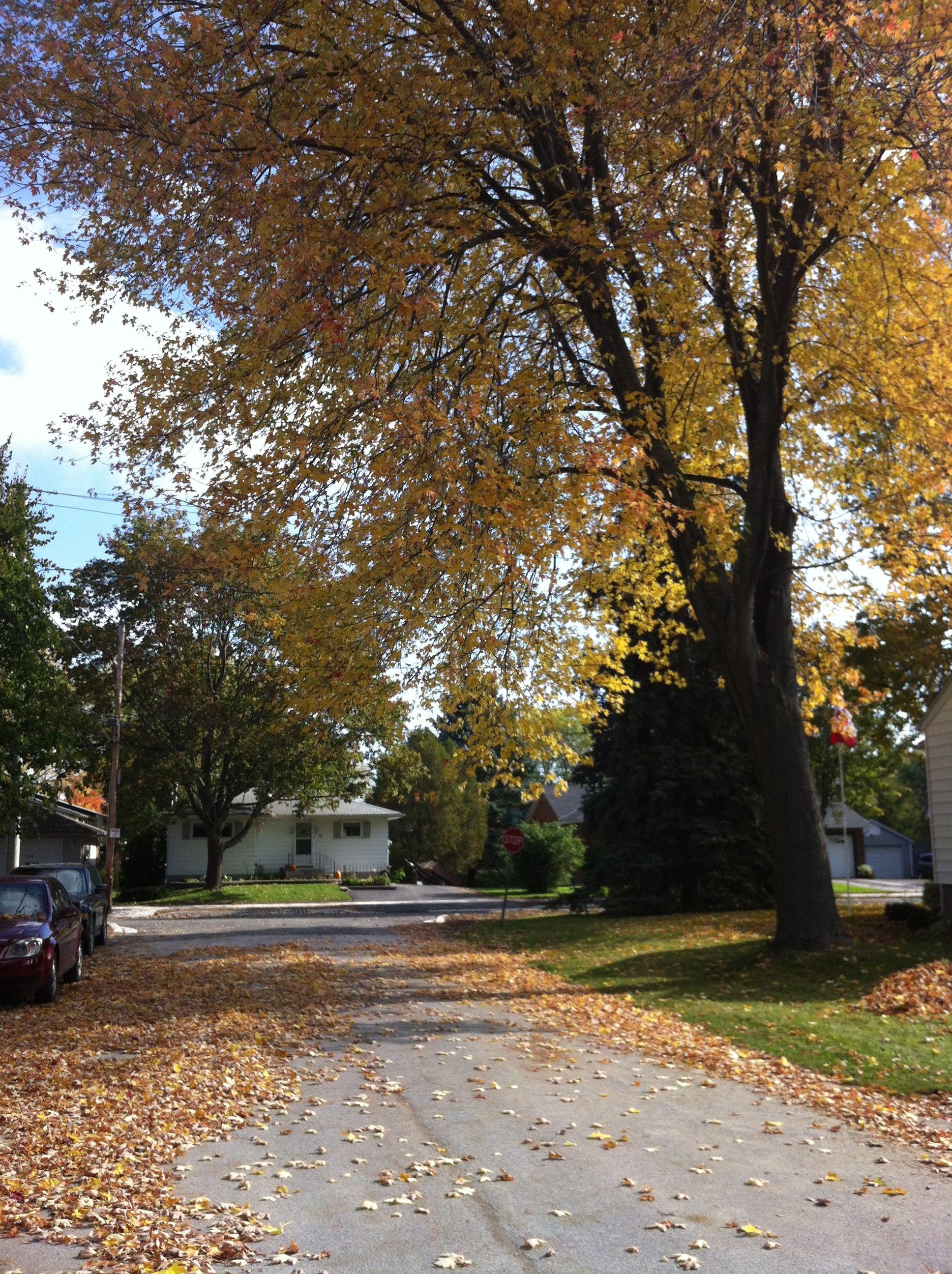 fall-in-town