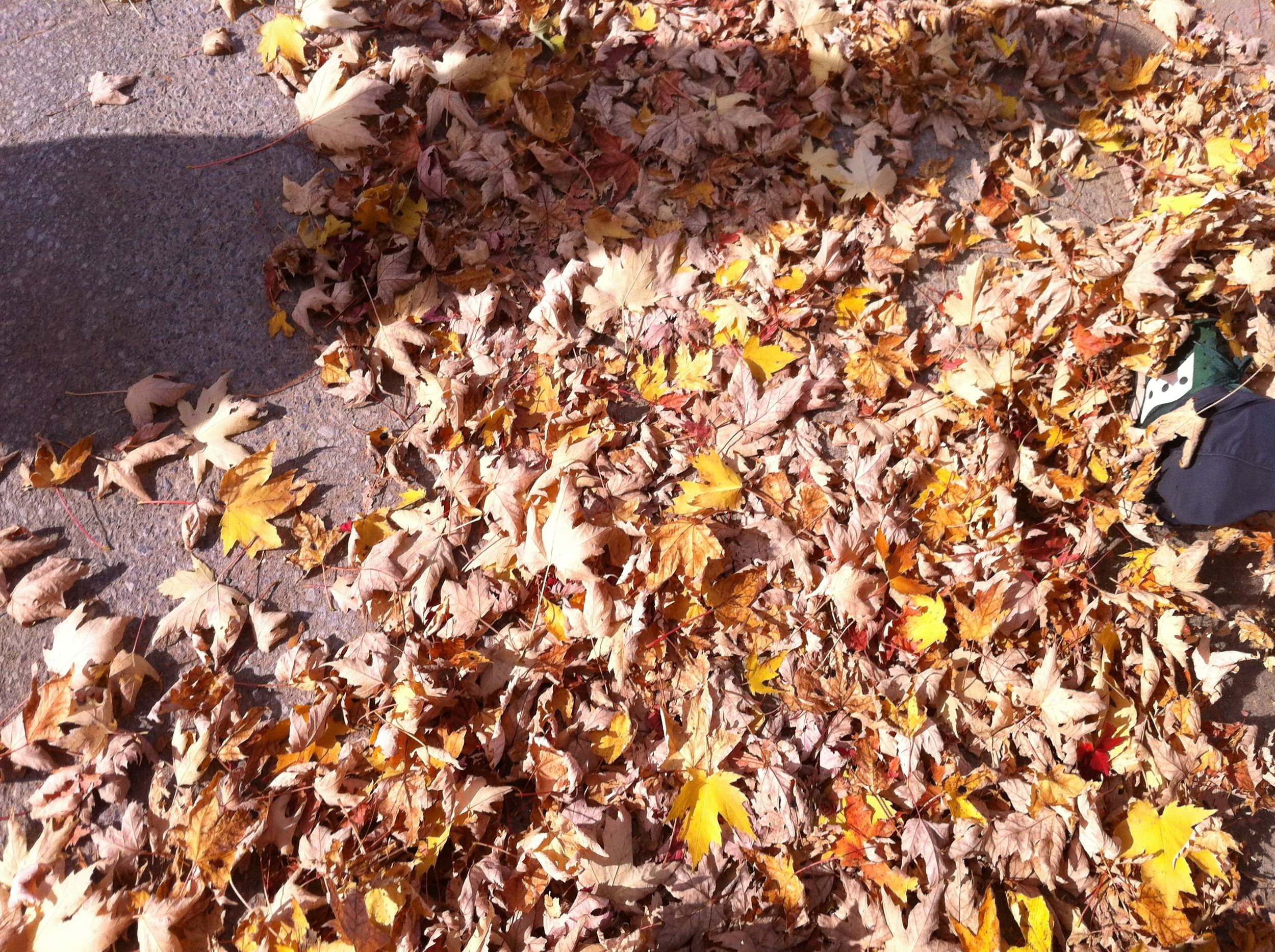 picture-of-leaves