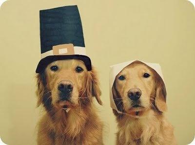 pilgrimdogs