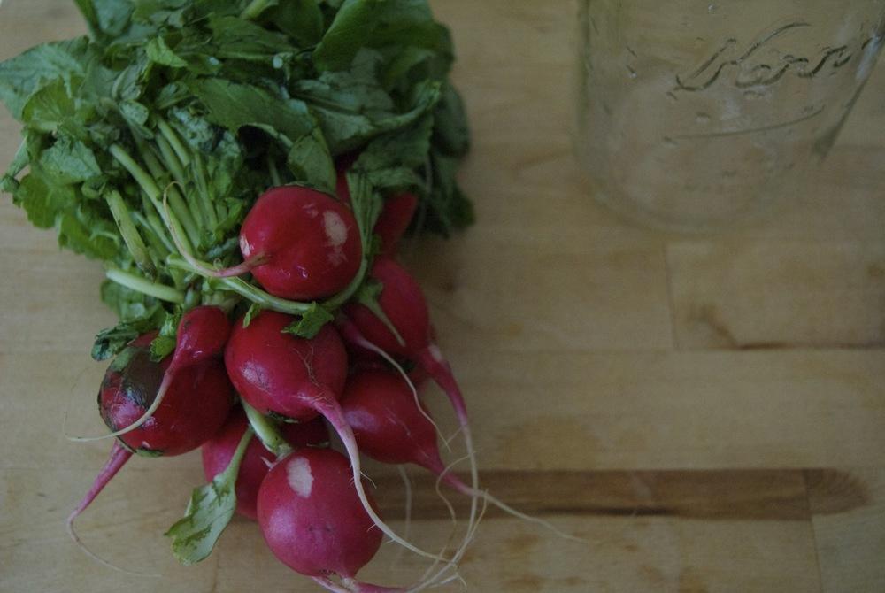 pickled-radishes