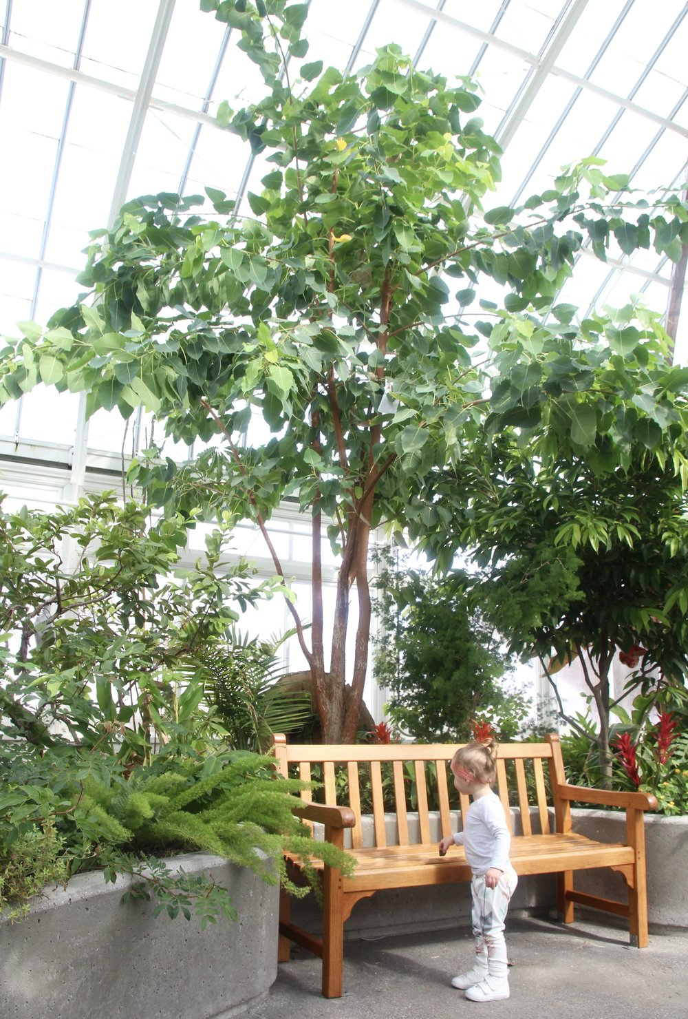 tropical_greenhouse.jpg