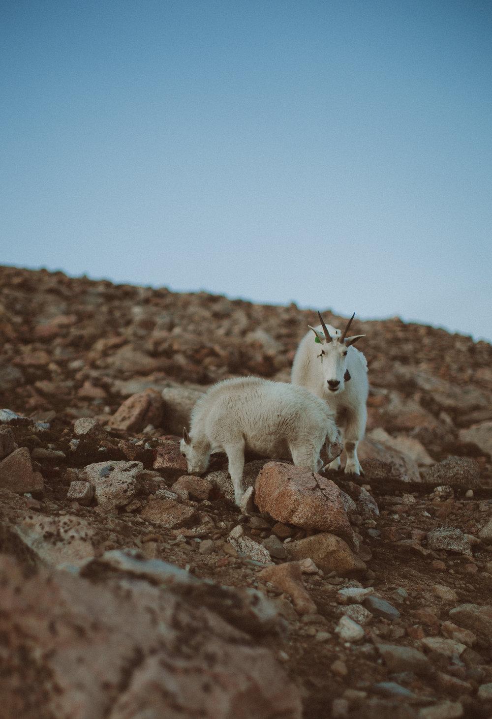 Colorado Mountain Wedding Photographer-6.jpg