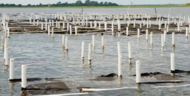 Aquaculture with floating cages and markers similar to those proposed for Beach Cove.