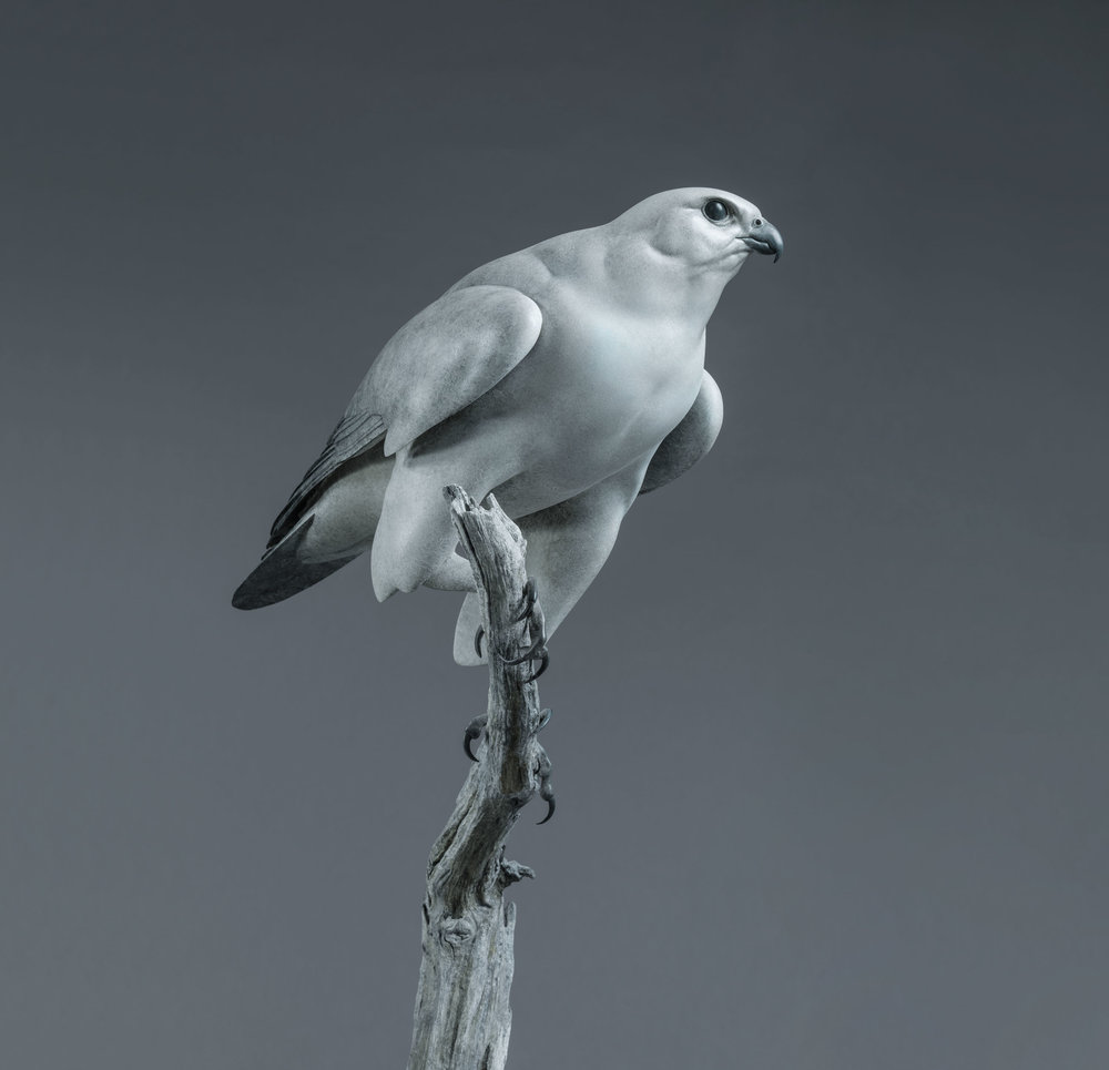 11. Gyrfalcon by Nick Bibby, Edition of 12, 67 x 24 x 18 inches (170 x 61 x 46cm).jpg