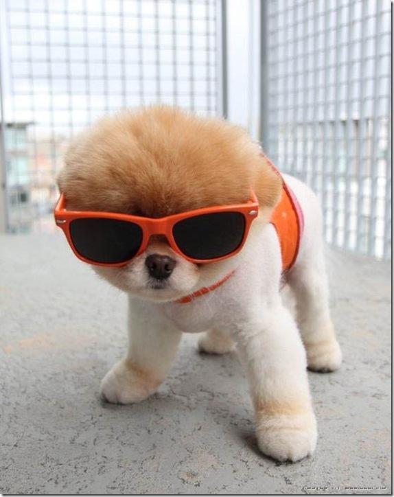 puppyalbum.jpg