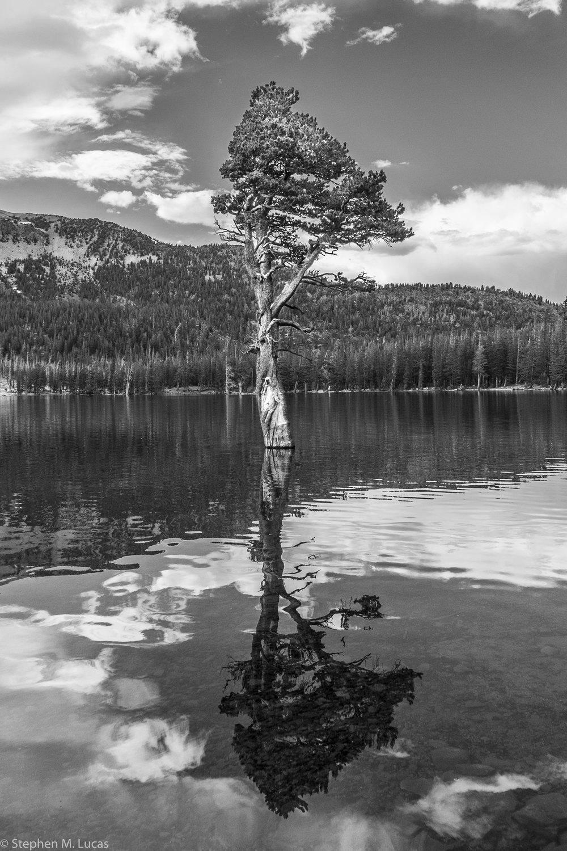 Tree in Water.jpg