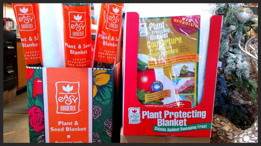 Protecting temperature sensitive plants, such as citrus & succulents, from frost is key. The best way, is to cover them with frost protecting blankets. Make sure there are no exposed areas, especially on the top of the plant. Do not prune out already frost damaged plant matter, for it can act as further insulation from the cold.