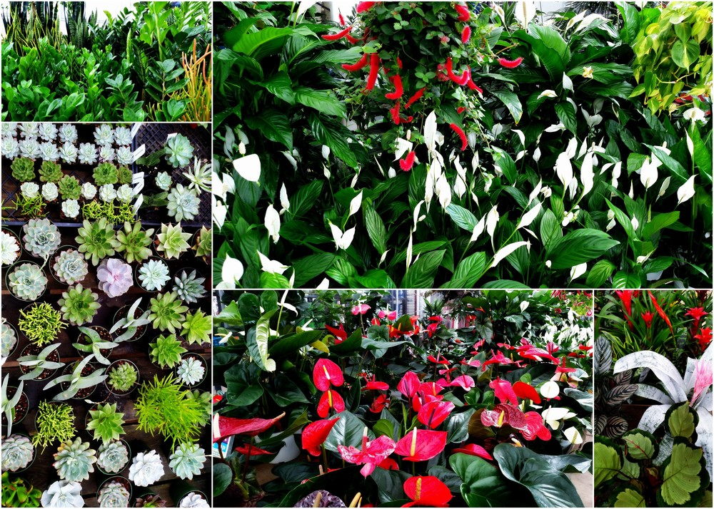 The greenhouse is stocked full of house plants, succulents, ferns, and bromeliads!