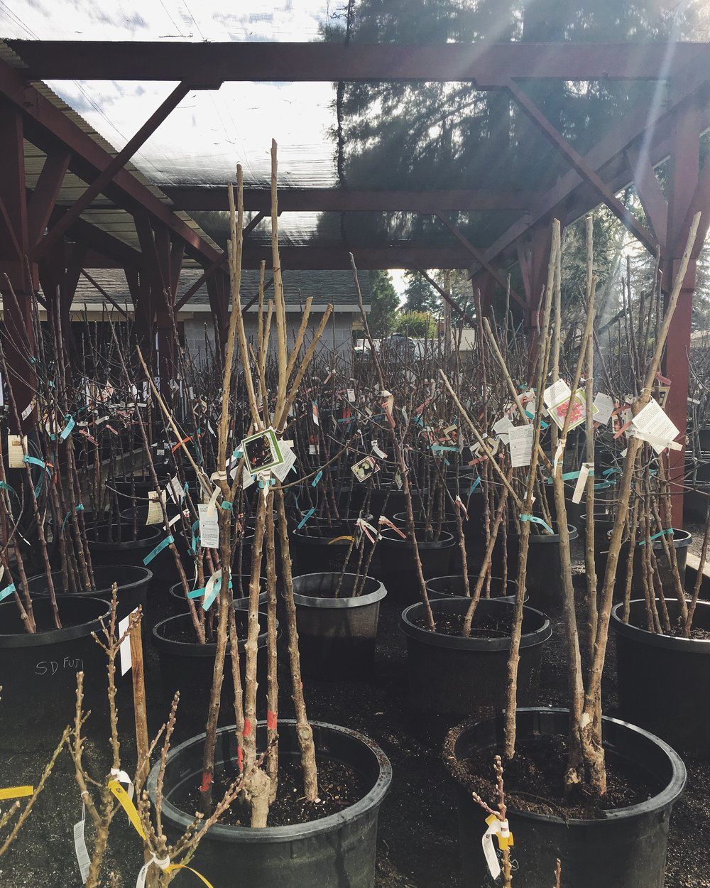 Look for our bareroot trees in mid-January!