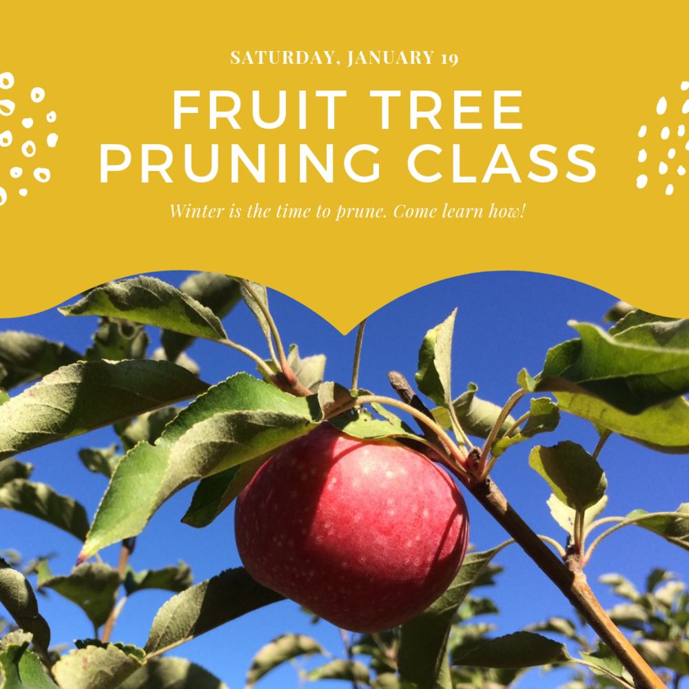 Fruit Tree Pruning class.png