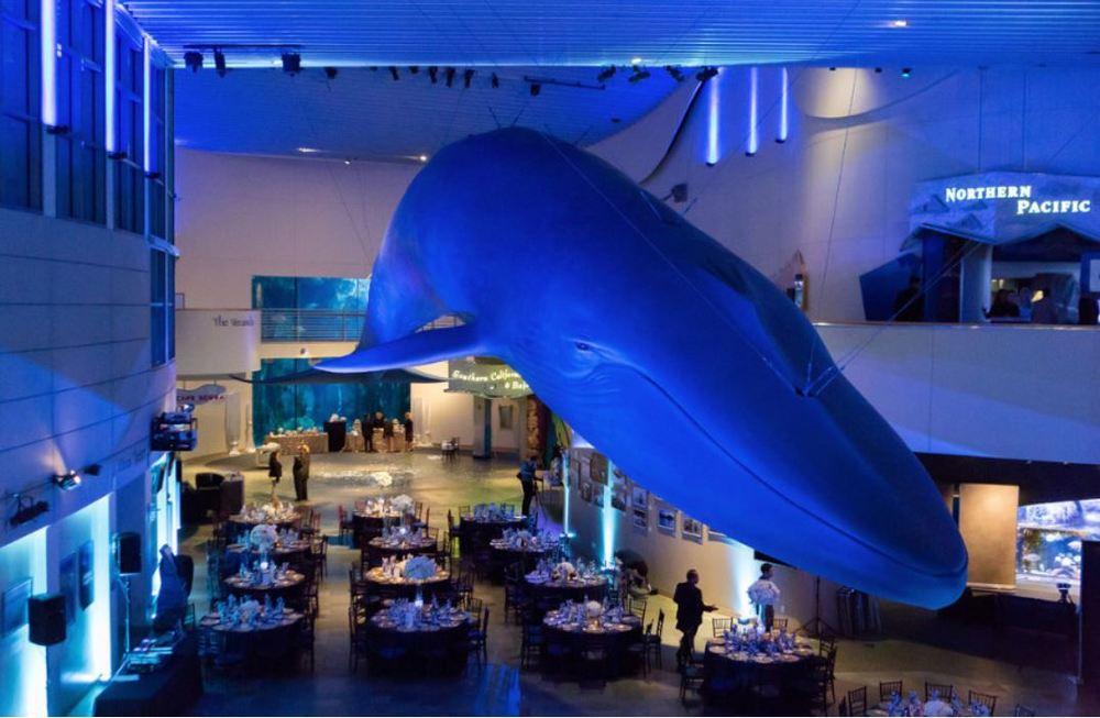 Aquarium Blue Whale.JPG