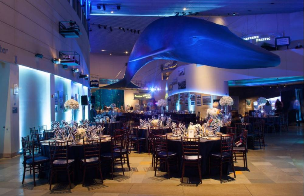 Aquarium Whale & Tables.JPG