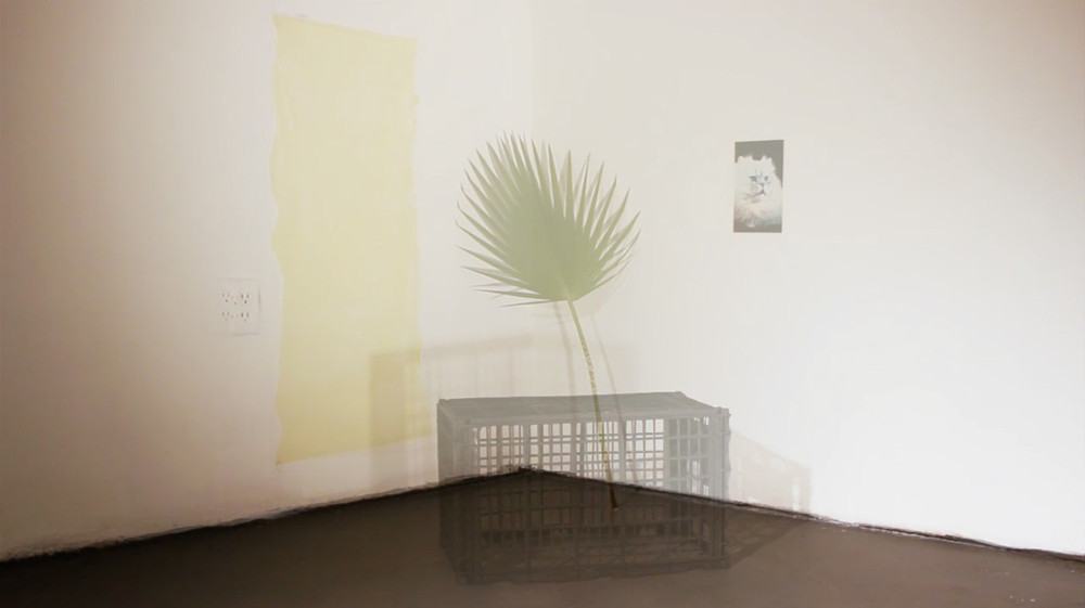 Image: Sarah Chan. Cat Corner (video still), 2015. Digital Video Projections.