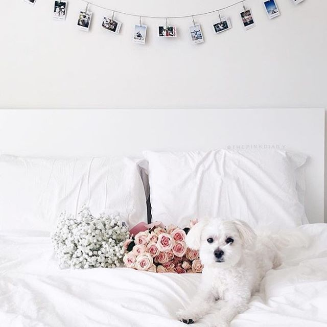 So much love in one bed | RG @thepinkdiary | #dogsofinsta #puppylove #love #bridalinspiration