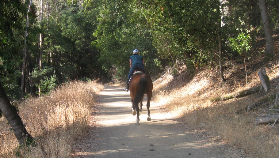 Galloping on the trail in Wunderlich Park