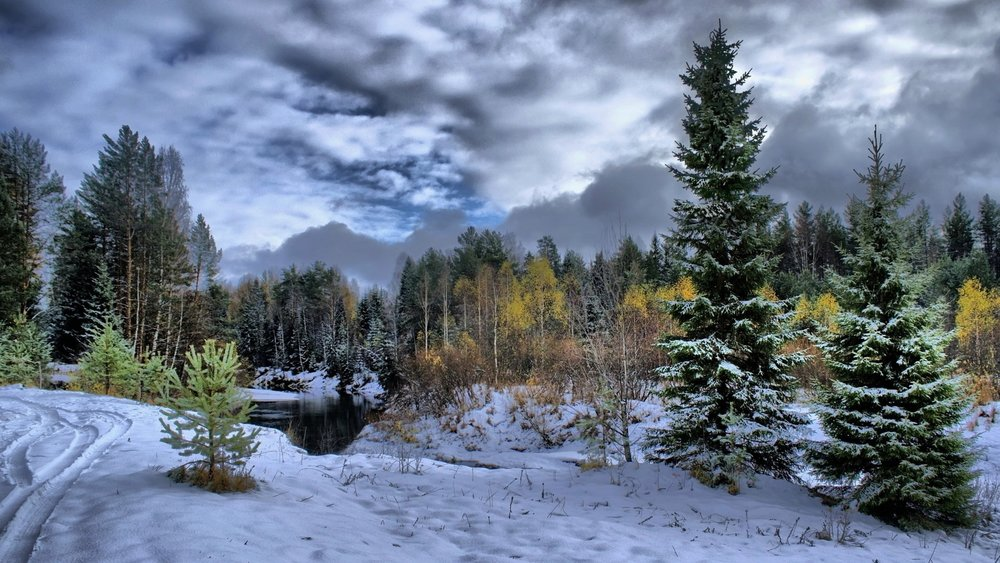 winter_snow_fir-trees_clouds_cloudy_trees_traces_protector_61260_3840x2160.jpg