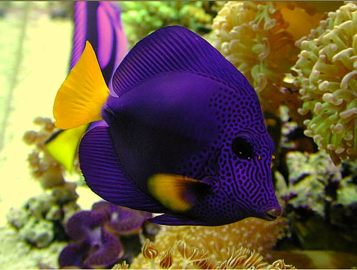 Colorful-fish-latest-wallpaper.jpg