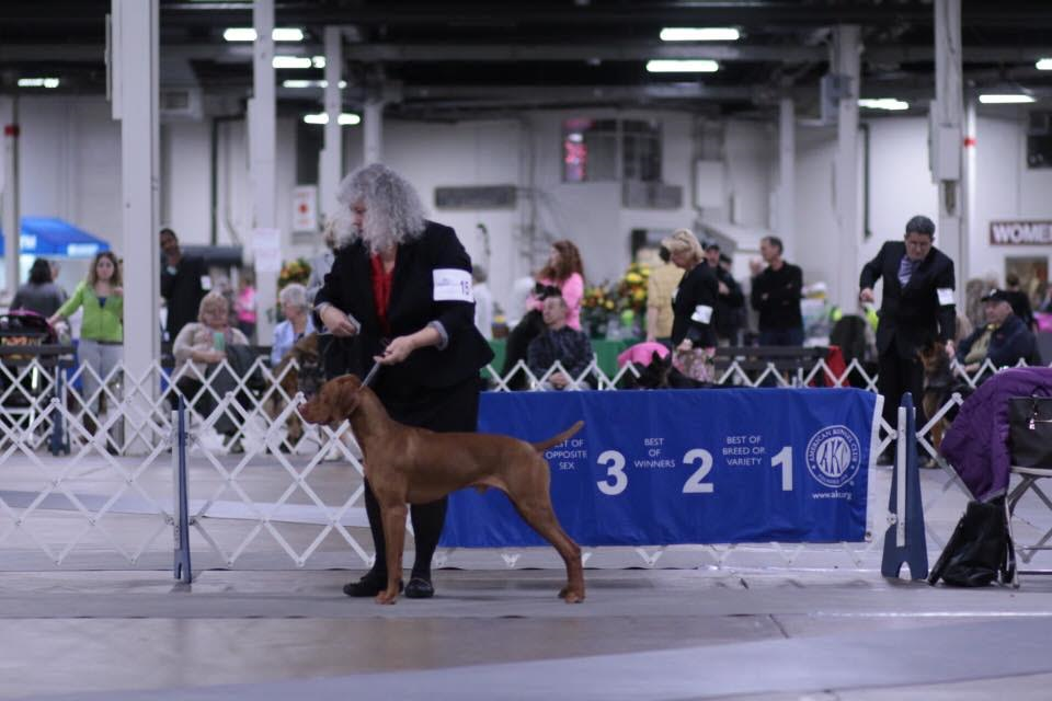 Katie's Mom and Jack participating at the dog show