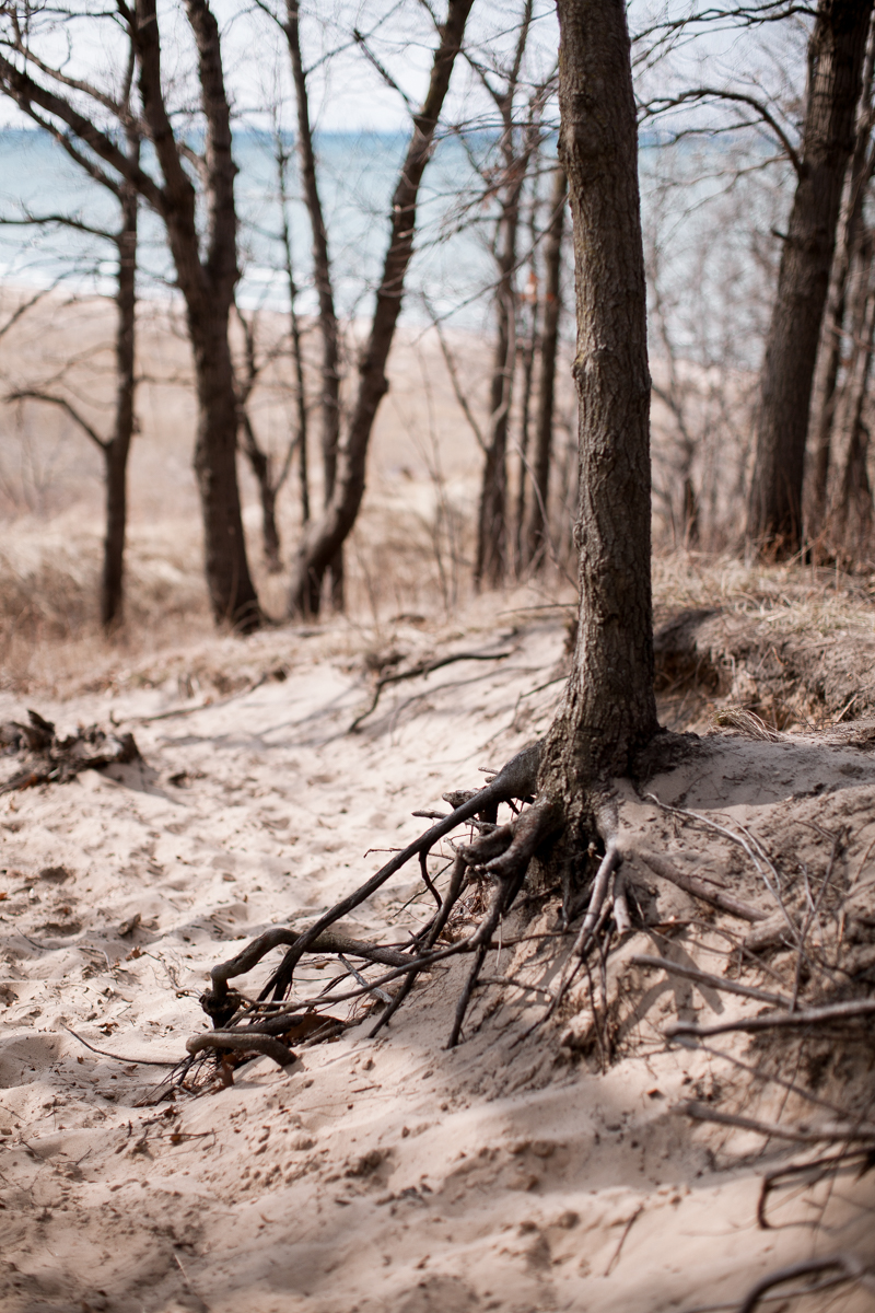 trails-and-ales-indiana-dunes-tree