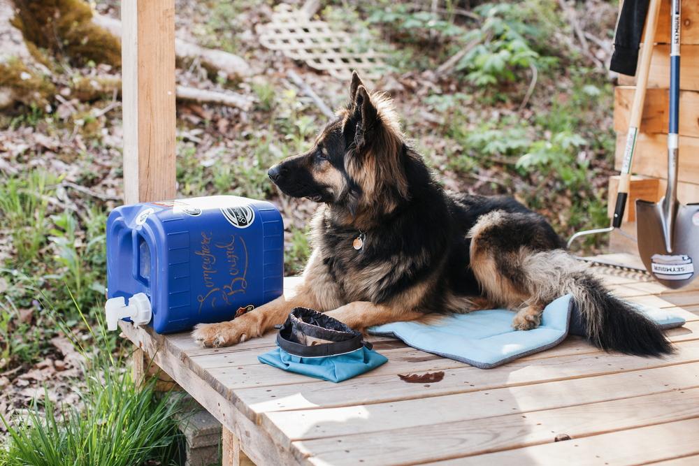fenrir_dog_hiking_cabin
