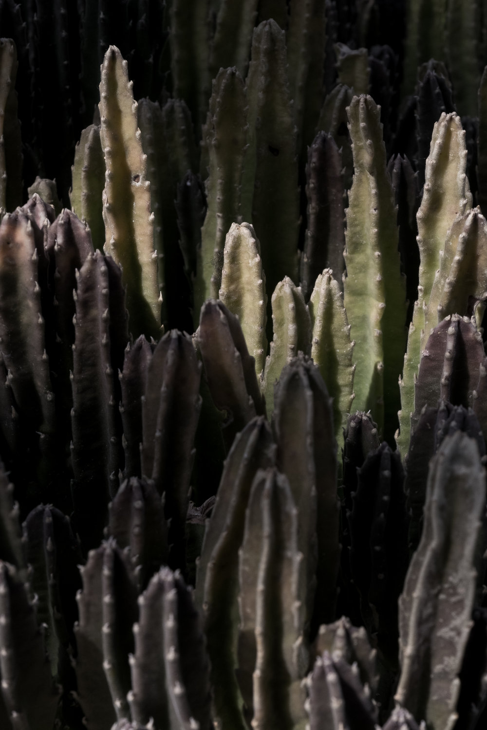 garfield-park-conservatory-cactus-2