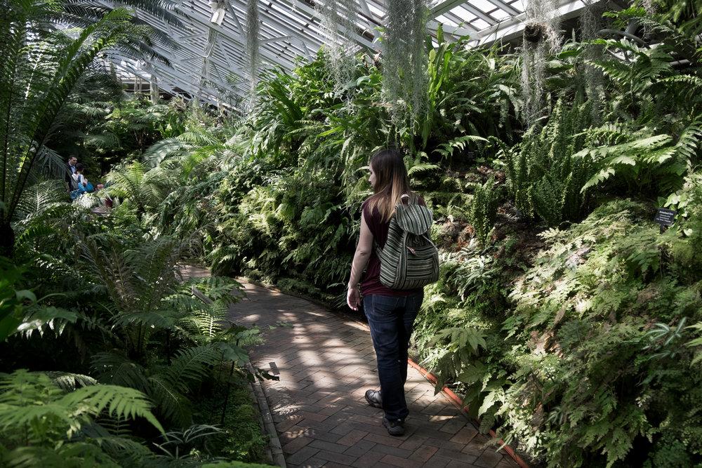 garfield-park-conservatory-ferns-3