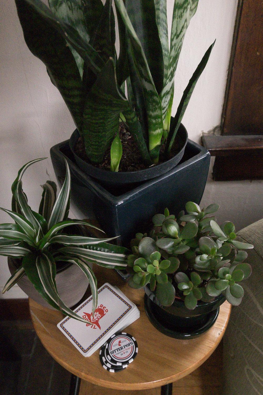 apartment-plants-2