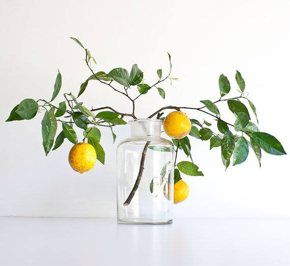 lemon branches in apothecary jar | elizamcnabb.com