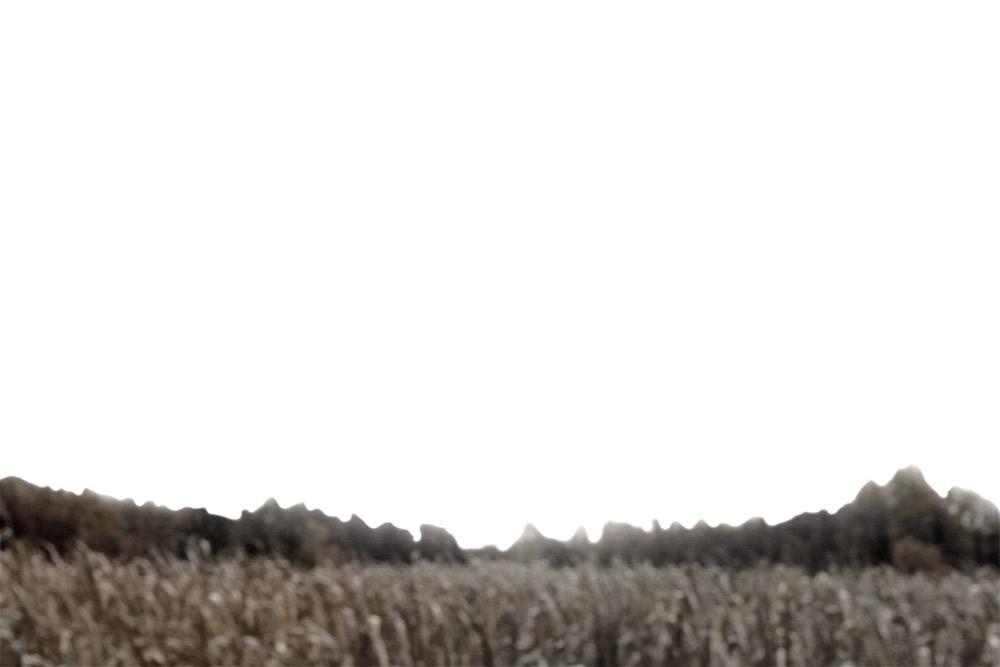 cornfield-1.jpg