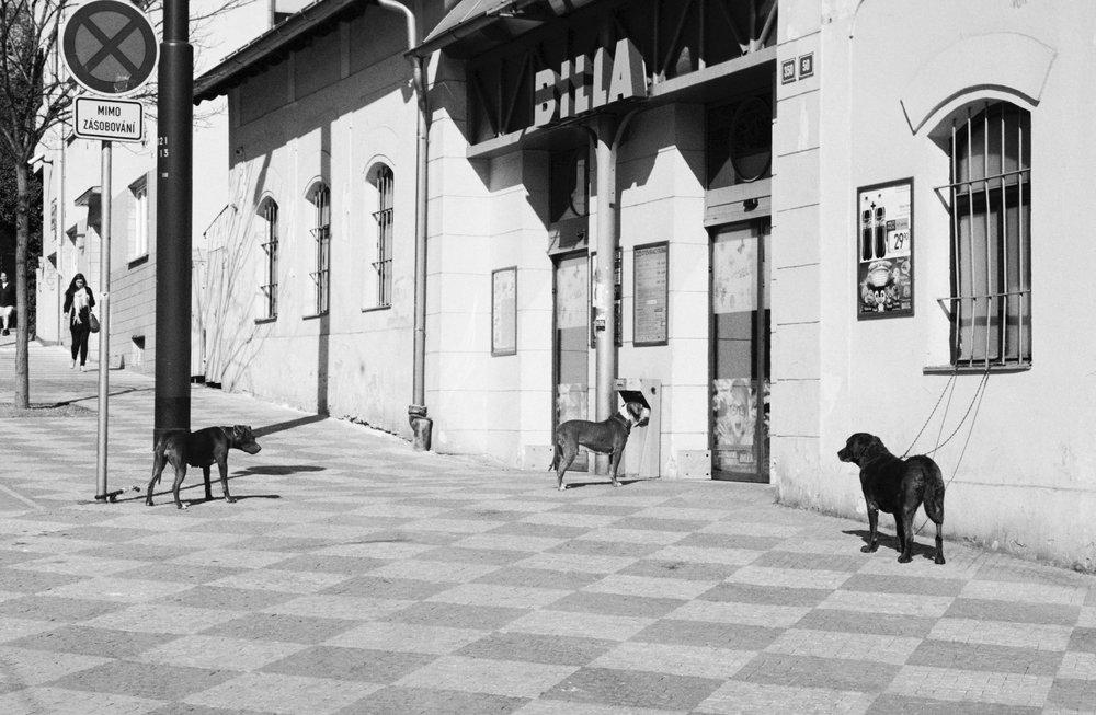 Dogs, Prague