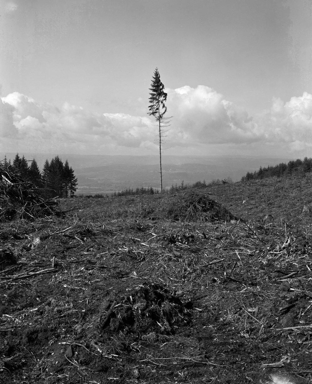 Abandoned logging site, Oregon