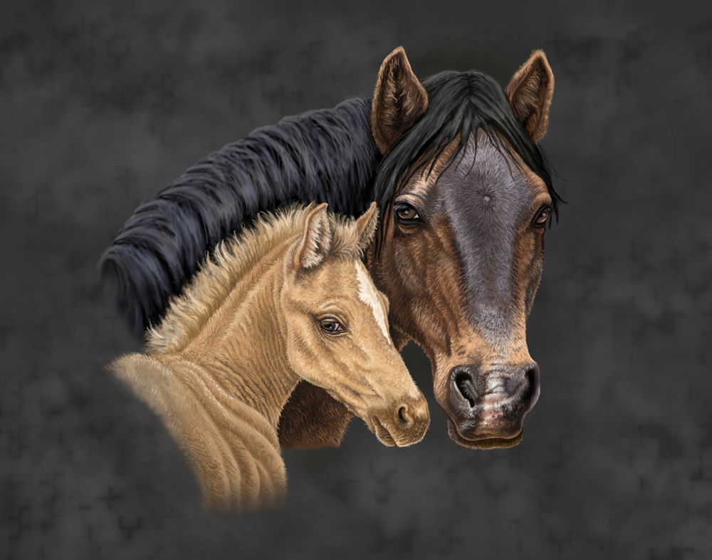 horse 11x14.jpg