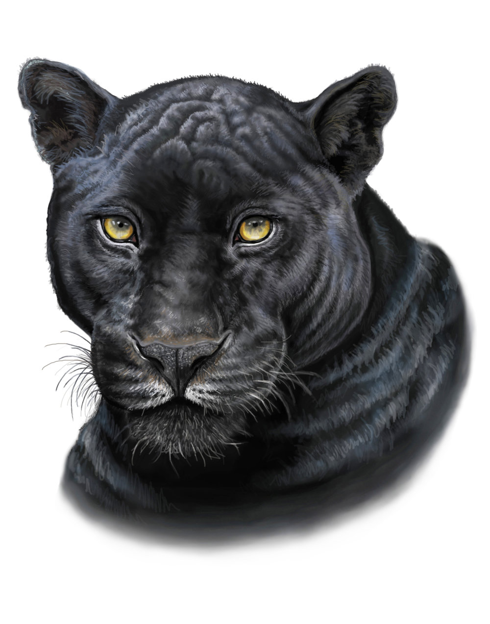 panther fixed 11x14.jpg