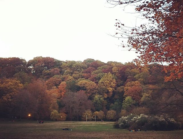 hard to believe this is Manhattan #fallforall #allforfall #nyc #chchchanges #🍁