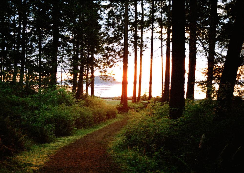 Lena_Abujbara_sunsetforest_web.jpg