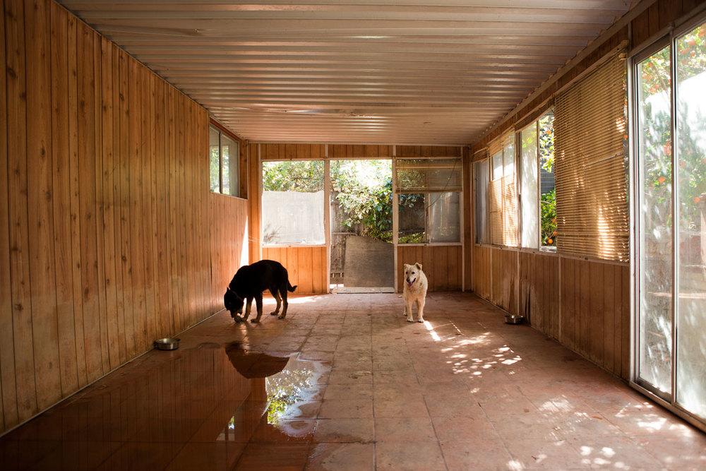 LenaAbujbara_dogs_web.jpg