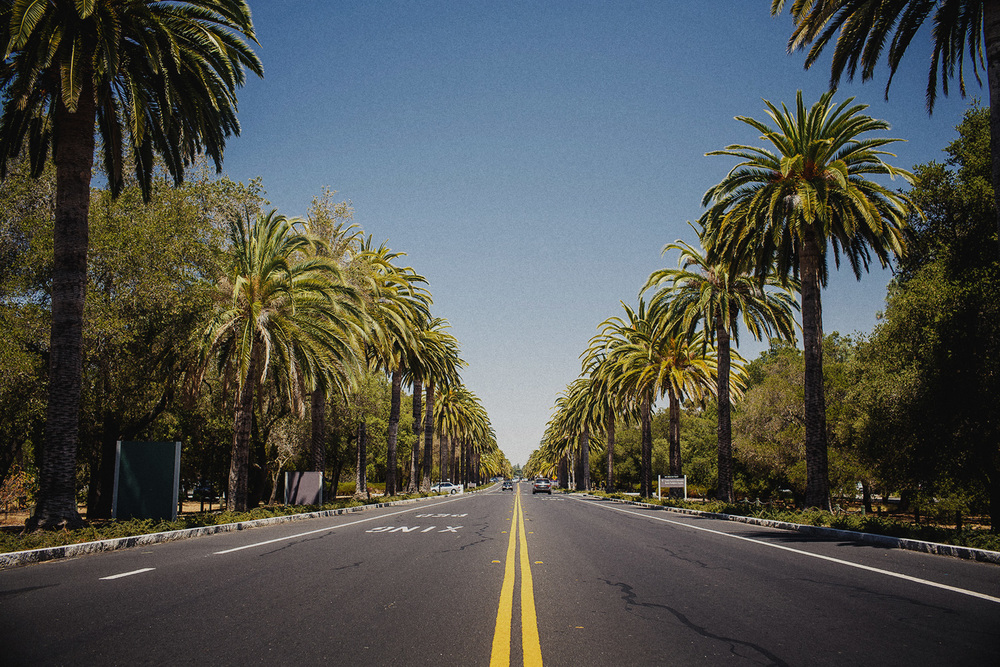 bigstock-Palm-trees-road-58343801.jpg