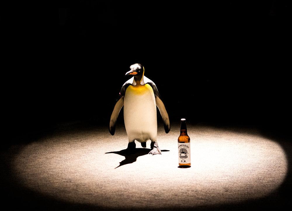 Zoo Penguin-19.jpg