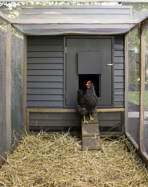 modern chicken coop.jpg