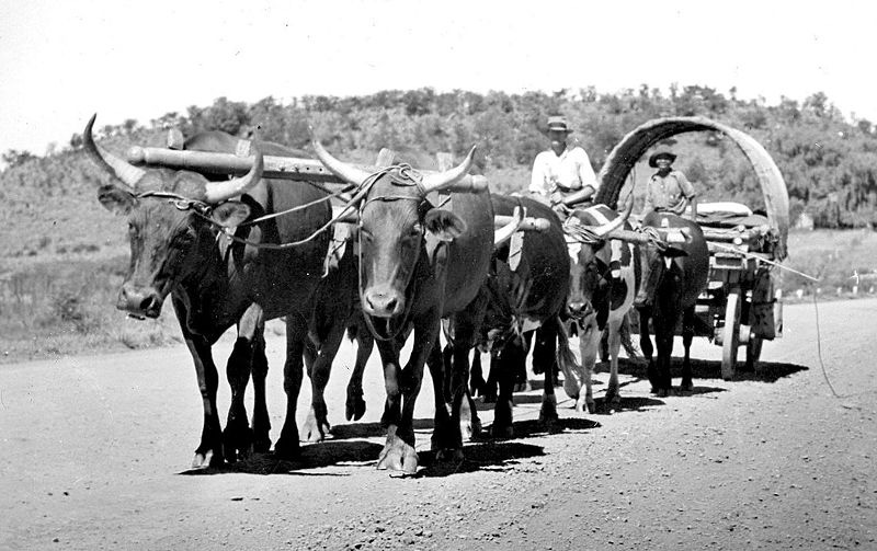 Carro boer de transporte. Foto de 1940. Fuente:  streamsandforests.wordpress.com