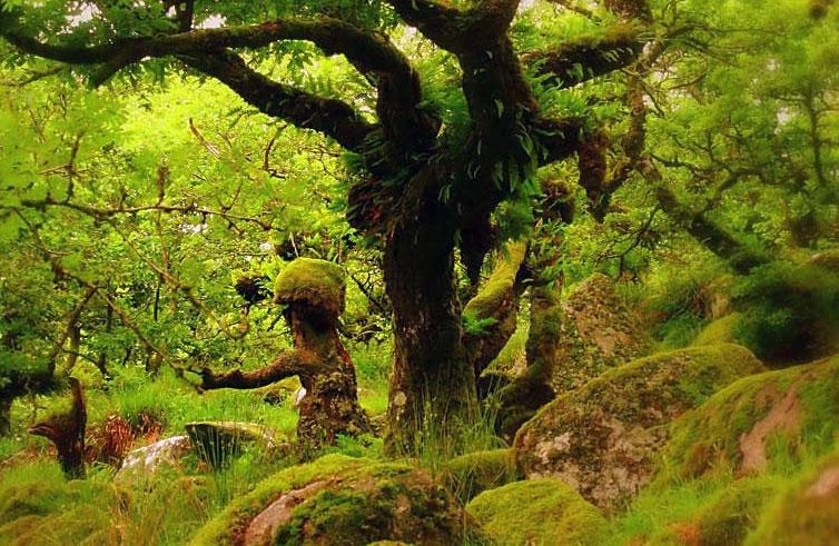 Wistman woods . Foto de Steven Marks