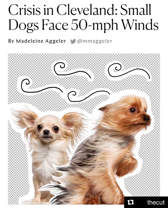 Cleveland in the news! Nymag's @thecut  Hope all pups are safe. #happyfriday gang 🤗. . . . . . . . . . . . #cleveland #clevelandnews #fridaygiggle #fridays #fun #giggles #finallygingercookies #breaktime #puppies