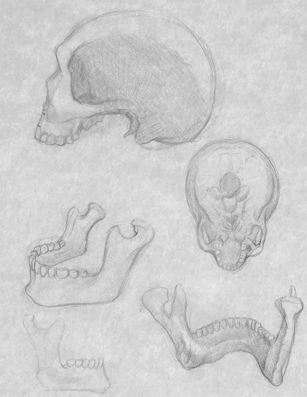 skull_study_1.jpg