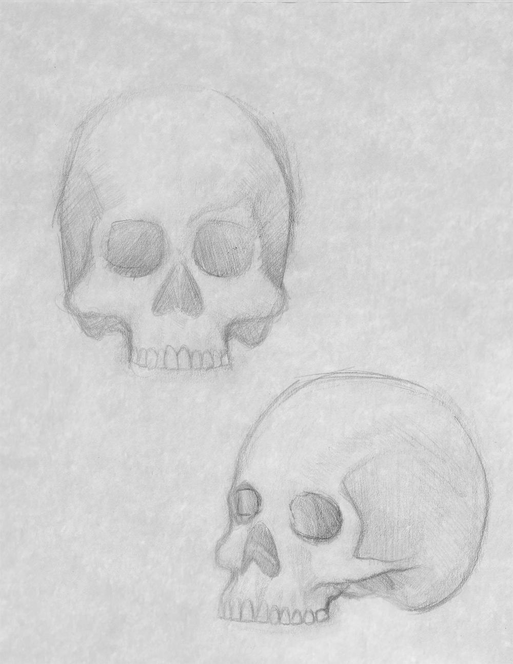 skull_study_2.jpg