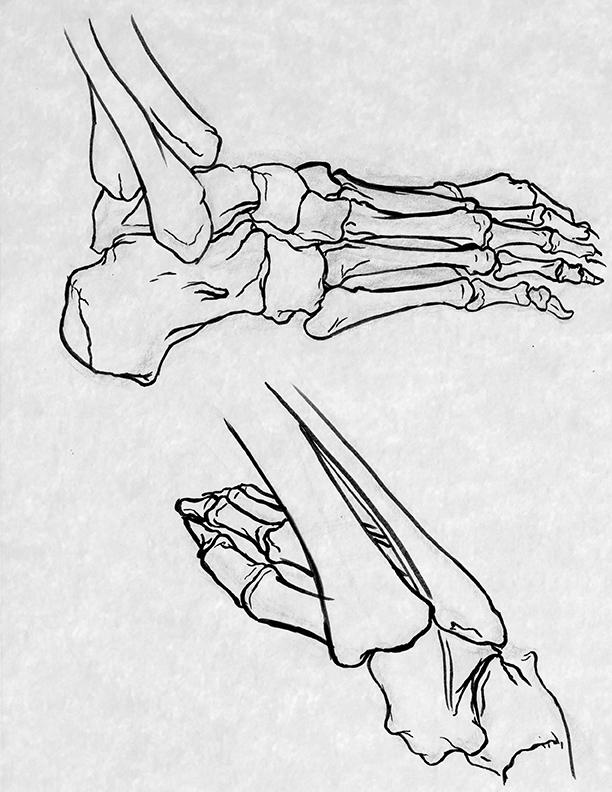 foot_skeleton.jpg