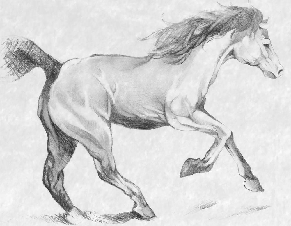running_horse.jpg