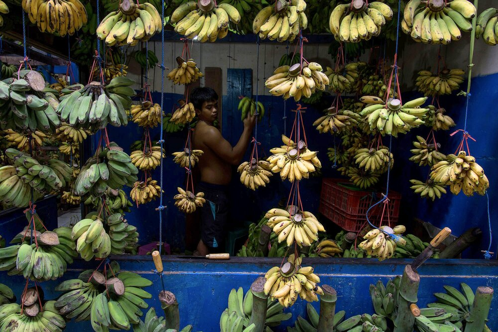 N_Borneo_1_ABC5942b_Web.jpg