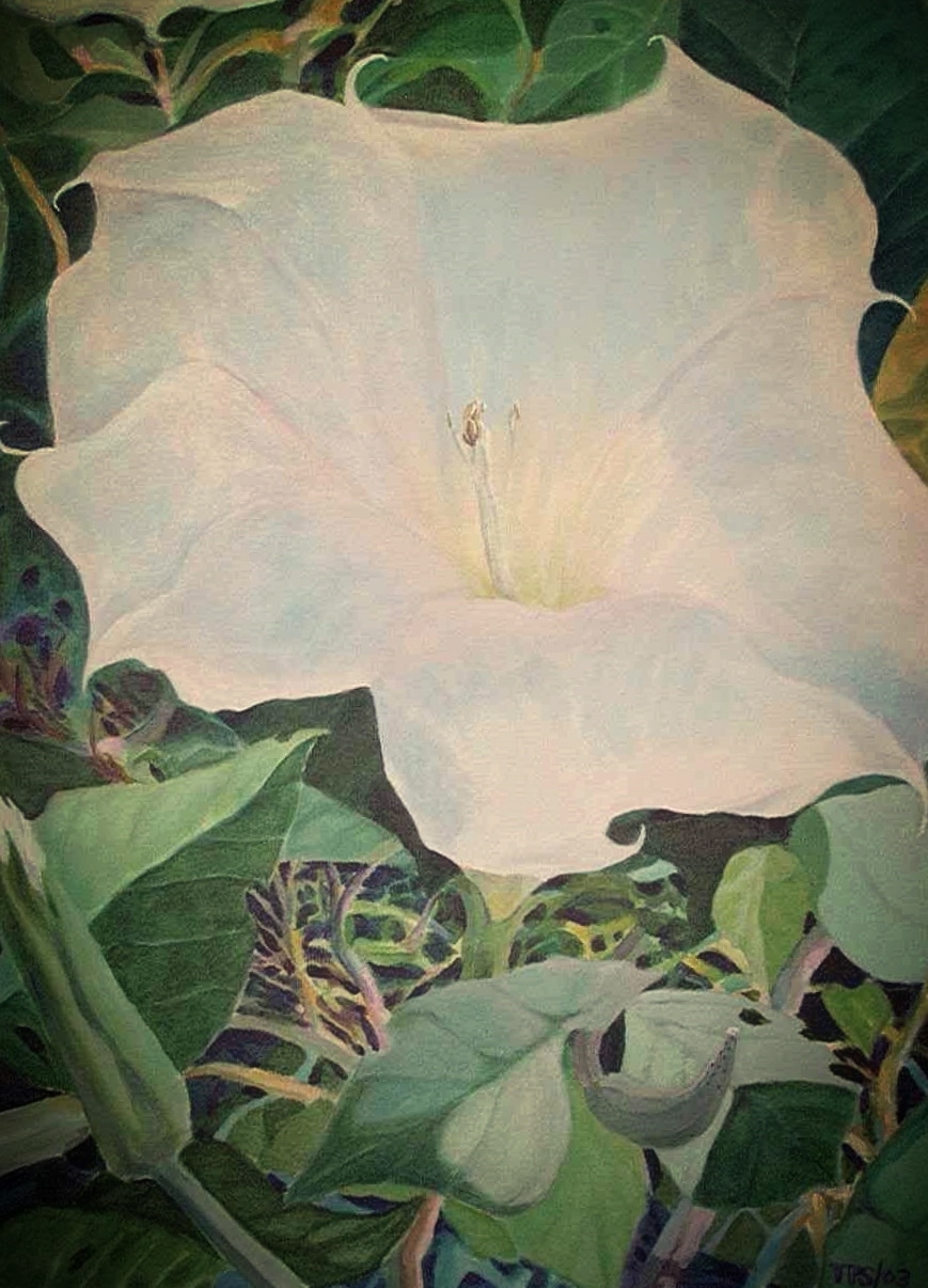 """Sacred Datura"" Acrylic on canvas 18X30"